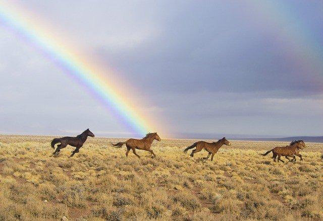 сон о лошадях