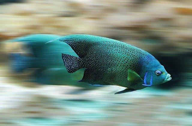 рыбы в снах