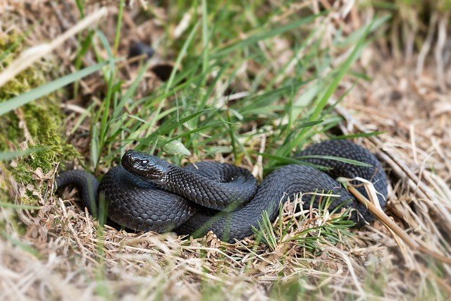 сонник-змея