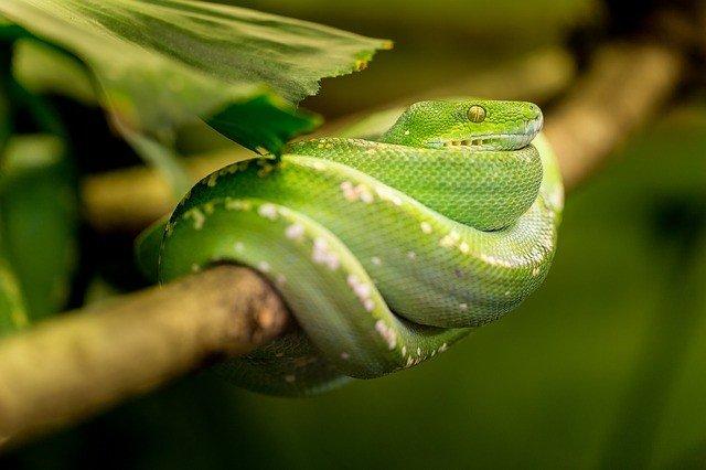 во сне змея