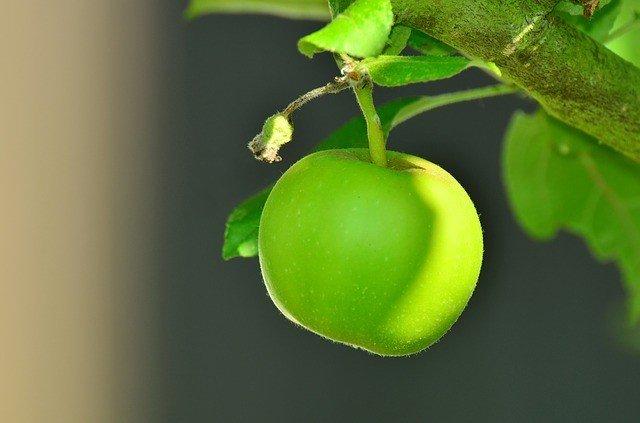 сонник-яблоко